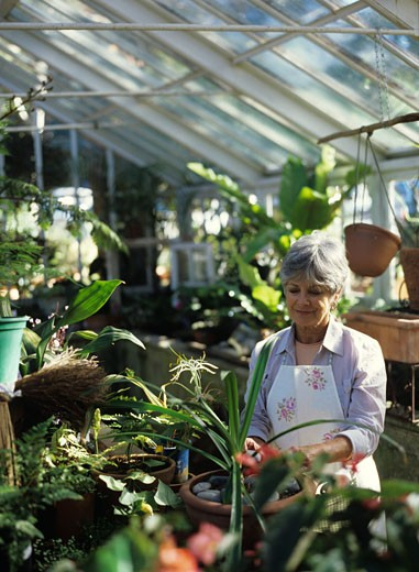Stock Photo: 1491R-1012786 Senior woman tending to plants in greenhouse
