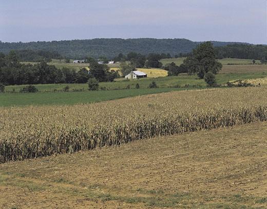Farm landscape near Mammoth Cave, Kentucky, USA : Stock Photo