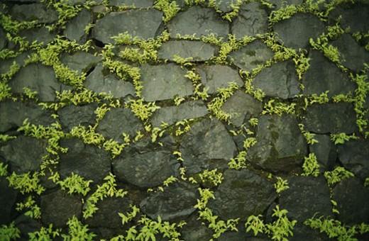 Plants growing in between rocks : Stock Photo