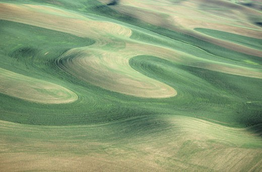 Stock Photo: 1491R-1021589 Contour plowing green winter wheat and lentil fields, late Spring, aerial view