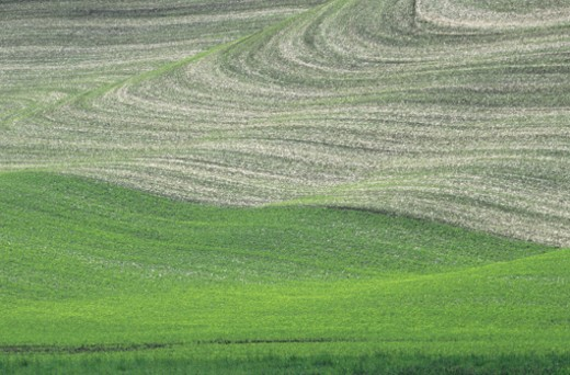 Stock Photo: 1491R-1021600 Contour plowing rolling lentil and fallow fields, late Spring