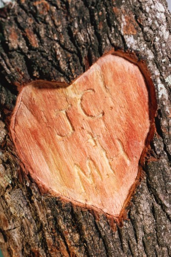 Stock Photo: 1491R-1034164 Initials carved into tree