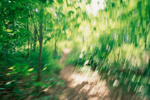 Stock Photo: 1491R-1035120 Blurred forest