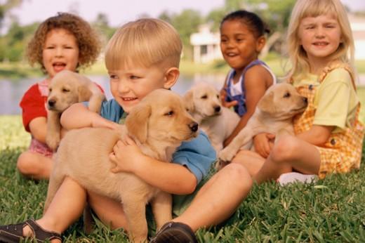 Children and puppies : Stock Photo