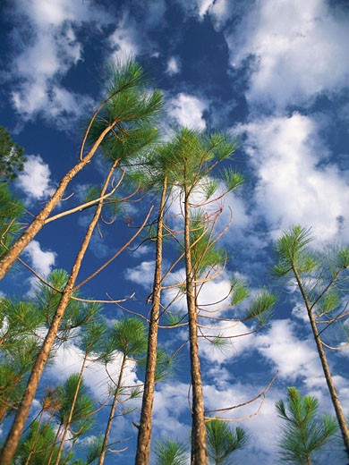Stock Photo: 1491R-1045662 Perspective view of trees, sky and clouds