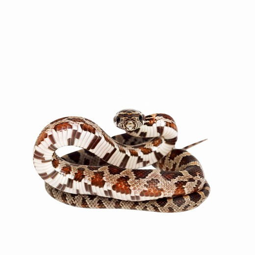 Close up of a snake : Stock Photo