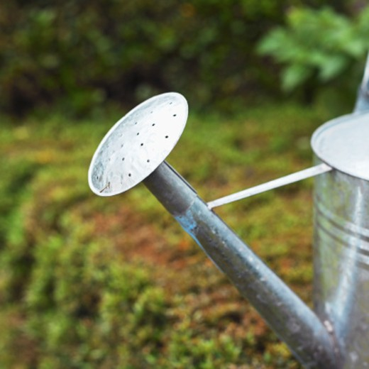 Stock Photo: 1491R-1073648 Watering can