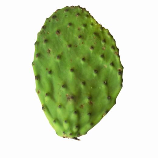 Close-up of a cactus leaf : Stock Photo