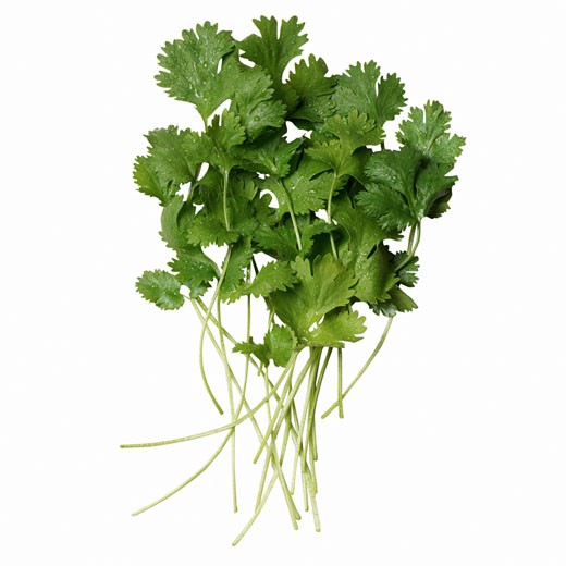 Stock Photo: 1491R-1076396 Close-up of coriander
