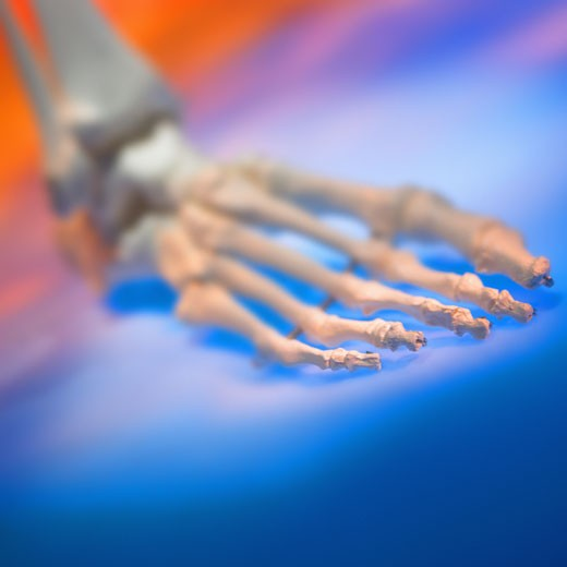 close-up of the skeletal bones of a human foot : Stock Photo