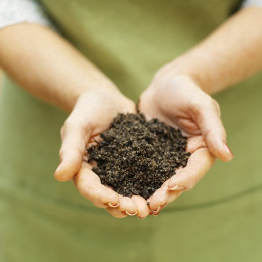 Woman's hands holding soil : Stock Photo
