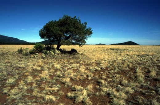 Stock Photo: 1491R-1140047 Single tree in desert