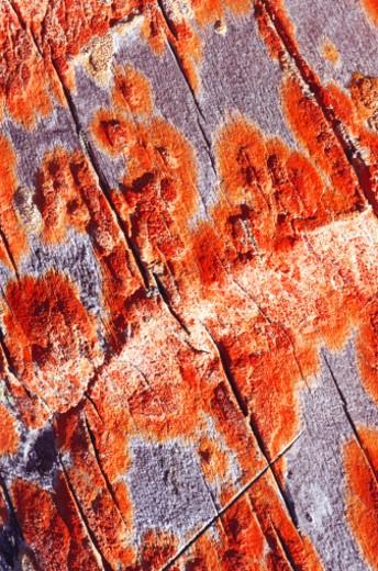 tree bark : Stock Photo