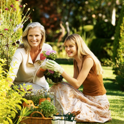 An elderly woman and a young woman tending to flowers in a garden : Stock Photo