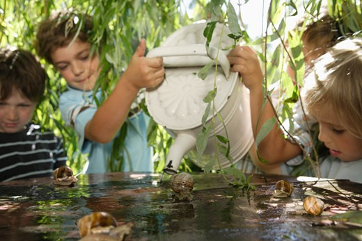 Stock Photo: 1491R-1158216 Young boys pouring water on snails