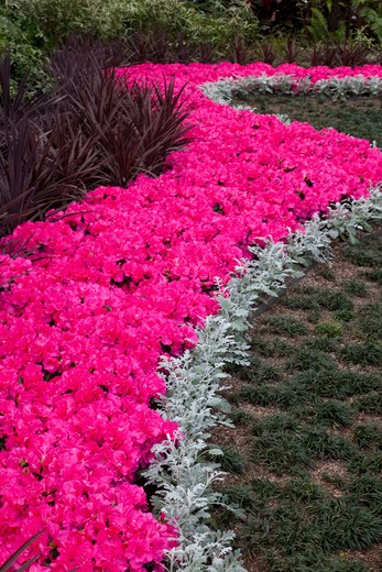 Planting of Azeleas Curve pattern Callaway Garden : Stock Photo