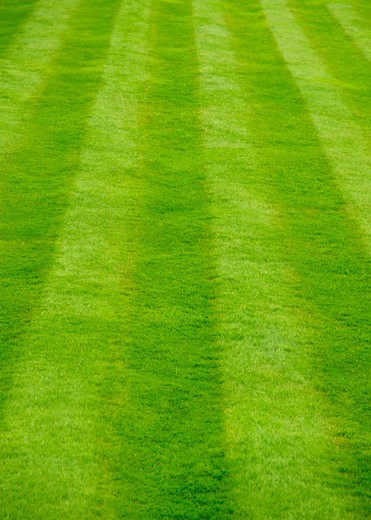 Striped grass lawn, full frame : Stock Photo