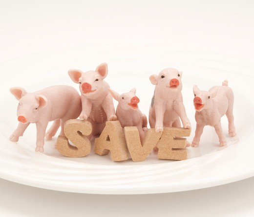 Toy pigs and 'SAVE' sign on a plate. : Stock Photo