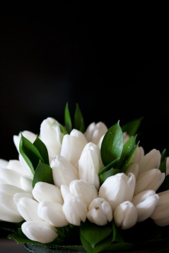 Simple white bouquet of flowers on a dark background. : Stock Photo