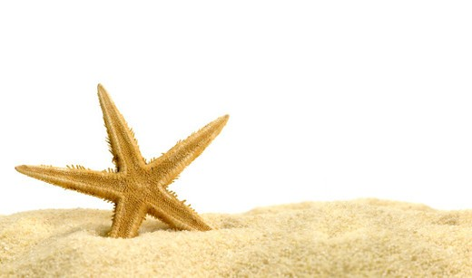 Stock Photo: 1491R-1174252 Star fish shot in the sand. The item is in the foreground of the photo. Horizontal frame.