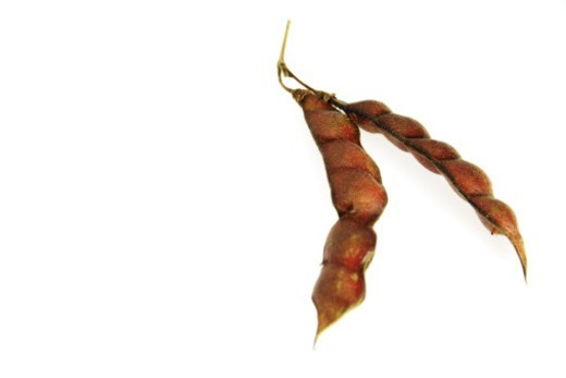 Stock Photo: 1491R-1177433 Pods of brown peas