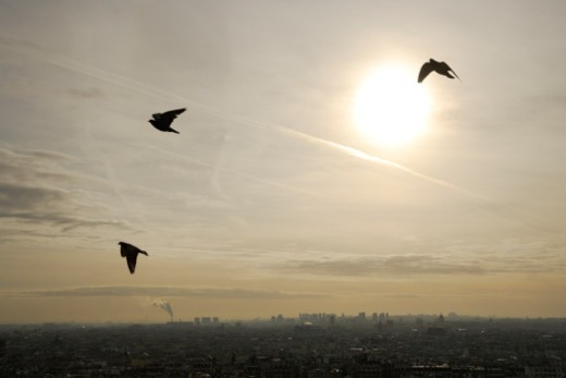 Pigeons flying over the Paris city. : Stock Photo