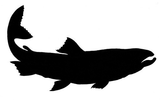 Stock Photo: 1491R-1200259 A simple black silhouette of a trout.