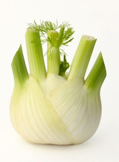 Fennel bulb, Foeniculum vulgare, ready to prepare. Fennel is an aromatic herb used in cooking but it also has medicinal properties. : Stock Photo