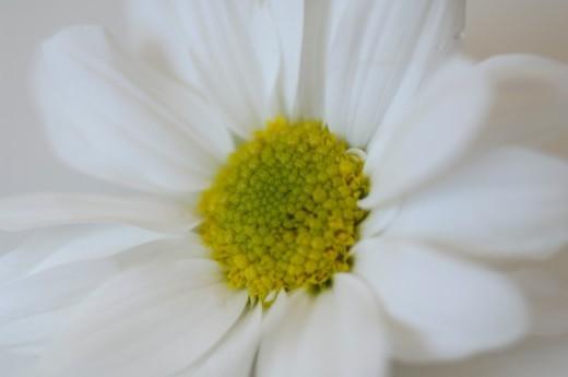 Stock Photo: 1491R-1205884 Nature