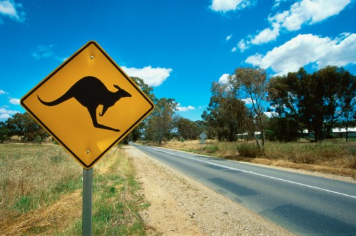 kangaroo warning road sign, Barossa Valley, South Australia : Stock Photo