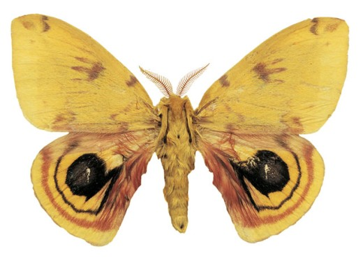 Close-up of a yellow butterfly : Stock Photo