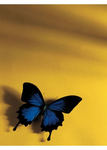 Stock Photo: 1491R-38079 A butterfly