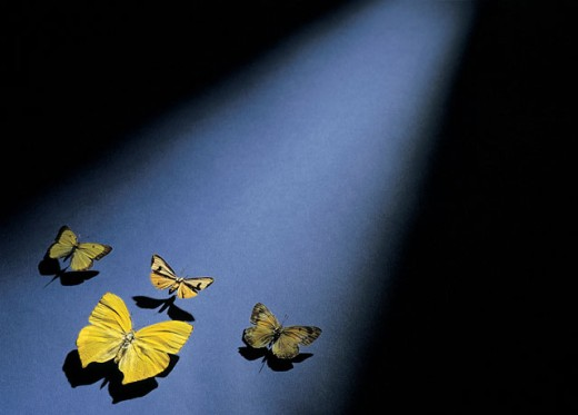 Four yellow butterflies on a blue background : Stock Photo