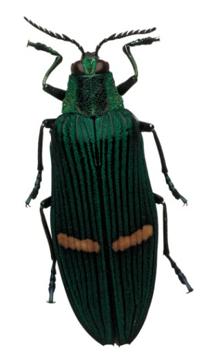 Close-up of a green beetle : Stock Photo