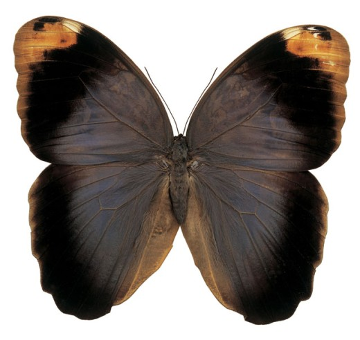 Close-up of a moth : Stock Photo