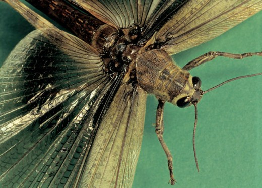 Stock Photo: 1491R-38143 Close-up of a flying insect