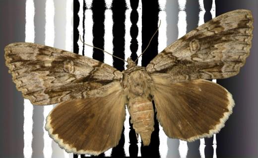 Stock Photo: 1494-134 Moth on Black  2003 Jim Macbeth (20th C. American) Digital collage