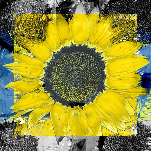 Stock Photo: 1494-152 Sunflower Time