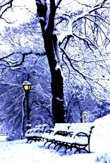 Central Park New York City USA : Stock Photo
