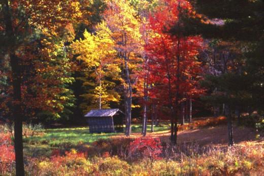 Innisfree Garden Millbrook New York USA : Stock Photo