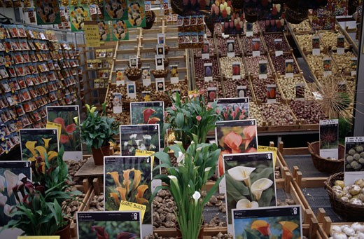 High angle of a tulip market, Amsterdam, Netherlands : Stock Photo