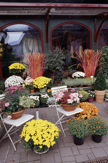 Flowers in front of a flower shop, Salzburg, Austria : Stock Photo