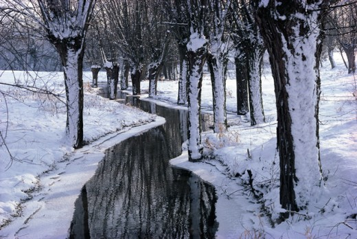 Snow covered trees along a stream, Flanders, Belgium : Stock Photo