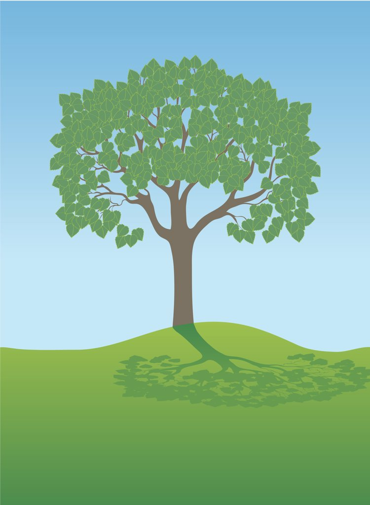 Summer Tree, illustration : Stock Photo