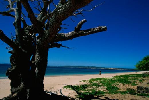Stock Photo: 1503-160 Madagascar