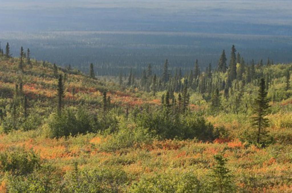 Stock Photo: 1511-261 Mackenzie Delta Northwest Territories Canada
