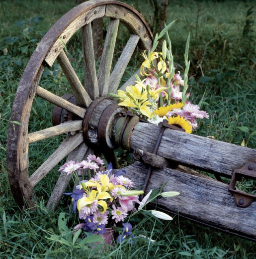 Stock Photo: 1516-131 Close-up of flowers with a wagon wheel in a garden