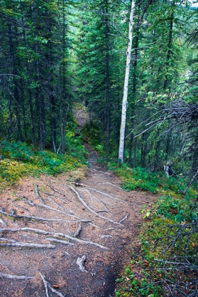 Stock Photo: 1522-223 Dirt road running through a forest, Denali National Park, Alaska, USA