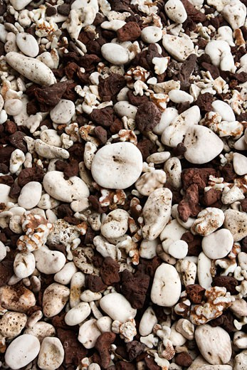 Close up of beach worn rocks and shells in Maui, Hawaii, USA. : Stock Photo
