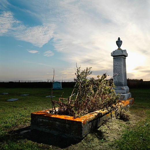 Memorial in rural cemetary with plants. : Stock Photo